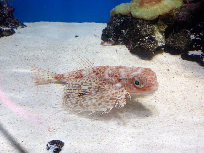 沼津港深海水族館は三世代のお出かけにぴったり!5