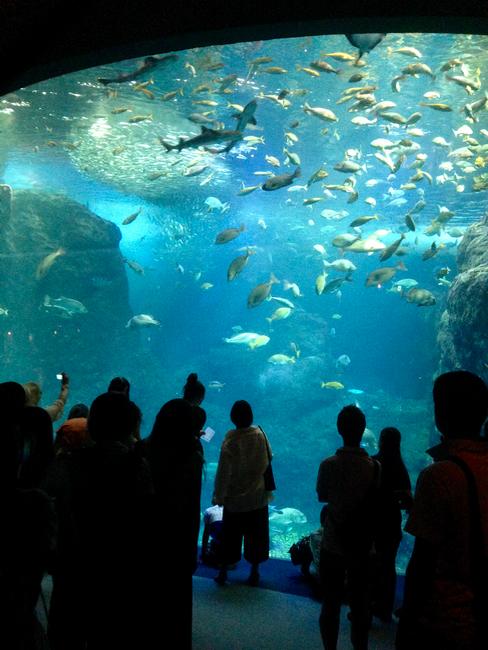 """新江ノ島水族館 """"えのすい"""" は午前中が快適でした!"""