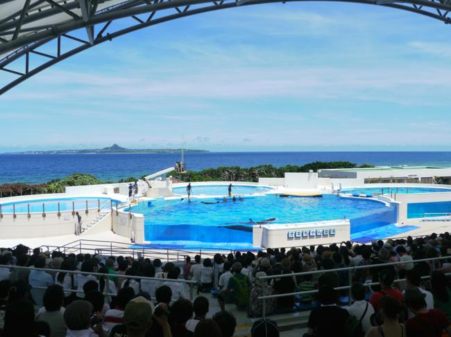 子連れで美ら海水族館ドライブを楽しむならホテル日航アリビラがおすすめ!