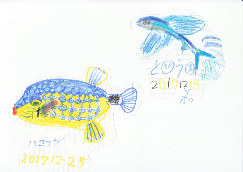 息子くんが描いたハコフグとトビウオの絵